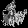 Experience Sled Dogs