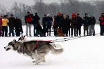 City of Lakes Skijoring Loppet (Photo Kelly Murphy)