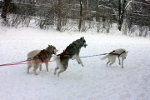 Dog Sledding @ French Park Clinic (Photo Kelly Murphy)