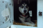 Gannon Going For a Ride in the Dog Boxes