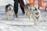Skijoring Demo @ Girl Scout Event (Photo Amy Flakne)